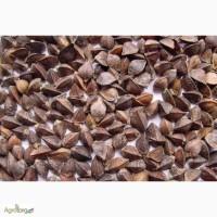 Семена гречихи Девятка (крупнозернистая)