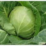 Продам семена капусты по низким оптовым ценам 275 грн/кг, Одесская обл