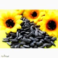 Семена подсолнечника Ягуар. Euralis