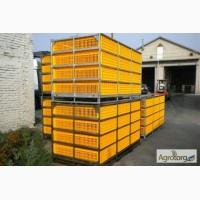 Ящики для перевозки птицы в автоматизированных системах