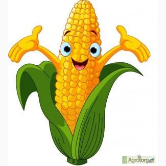 Семена кукурузы G Host GS110 N29 (Джи Хост)
