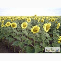 Крупно-оптовая закупка сельхоз продукции