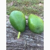 Продадим авокадо