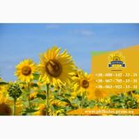 Семена подсолнечника / Рекольд - насіння соняшника