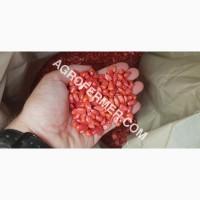 Семена кукурузы CORBIN FS - 899 ФАО Канадский трансгенный гибрид