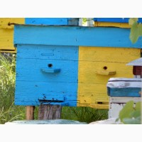 Продам бджоли з власної пасіки