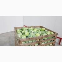 Продам овощи оптом Зборов. Самовывоз