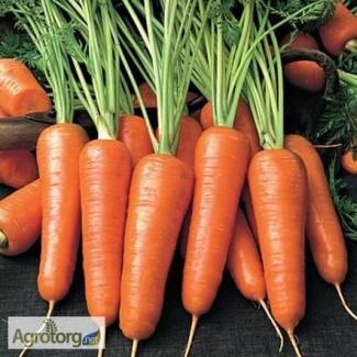 Куплю оптом моркву