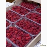 Продам малину урожая 2017 года, г. Днепропетровск
