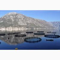 Рыбы и водные жители натуральные пробиотики