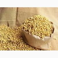 Семена сои Аполло от ФХ УкрАгро-Дар крупным оптом