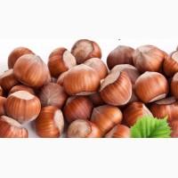 Куплю орех лесной(фундук) 50кг.в месяц