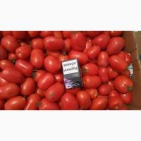 Продам помидор Сливку номерную 3402