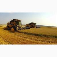 Купуємо оптом пшеницю, продовольчу та фуражну