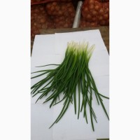 Продам зелену цибулю(перо)