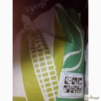 Продам насіння кукурудзи Syngenta NK Symba