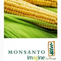 Семена кукурузы Monsanto различных гибридов