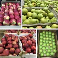 Яблоки оптом от производителя - ВЫСШИЙ СОРТ