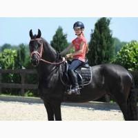 Очаровательная хорошо обученная фризская лошадь, красивая кобыла