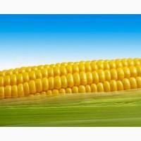 Підприємство закуповує С/Г продукцію Кукурудзу по всім регіонам України