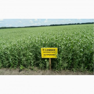 Продам насіння гороху сорт Астронавт 1репродукція