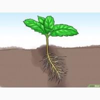 Пробиотики для растений и востановления жизни Земли