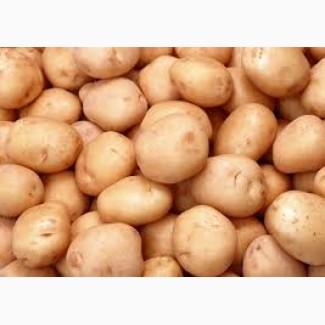 Продадим картофель по оптовой цене