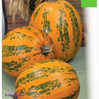 Семена тыквы Данька Полька 250грн/кг