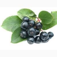 Черноплодная рябина 100 грамм