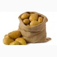 На экспорт продажа картофеля