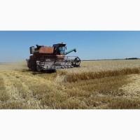 Куплю зерно: Кукуруза крупным оптом