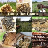 Продам плідні чистопородні бджоломатки(матки, пчеломатки) Карпатка