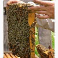 Продам Пчелы Пчелосемьи Бджоли Бджолосімї система Украинка цена договорная Черкасская