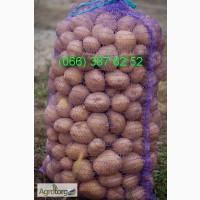 Продам семенной картофель оптом