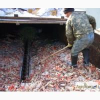Минизавод производства удобрений из панцирей краба и креветки