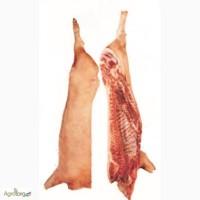 Куплю півтуші свинні 1категорія (беконка) великим обємом