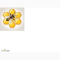 Продаю пчёлосемьи