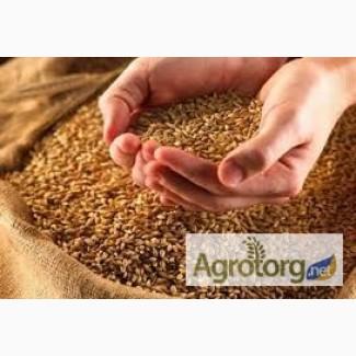 Закупаем зерновые, бобовые и прочие культуры