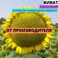 Семена подсолнечника гибрид Виват