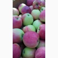 Яблука літніх сортів