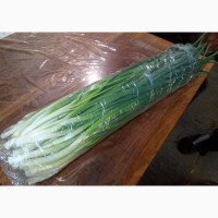 Продам в большом объеме лук зелёный
