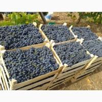 Реализуем виноград разных сортов