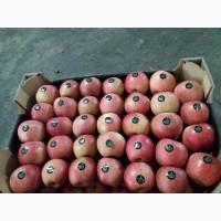 Продам яблоки урожай 2019 г