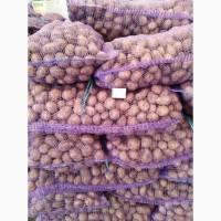 Подам посадочный картофель Украинский, Гранада. Киев. 8, 50 грн