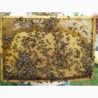 Продам бджолосім#039;ї харківська обл. м.мерефа
