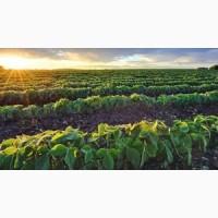 Сою ГМО без ГМО купимо великим оптом у с / г виробника