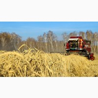 Закупка зерновых культур: куплю кукурузу в вашем регионе