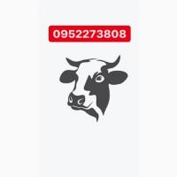 Куплю закупка коров быков лошадей