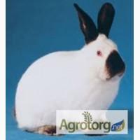 Комбикорм для кроликов травяной мукой