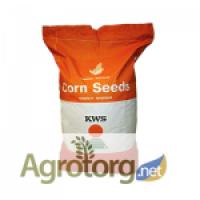 Посевной материал кукуруза Амамонте